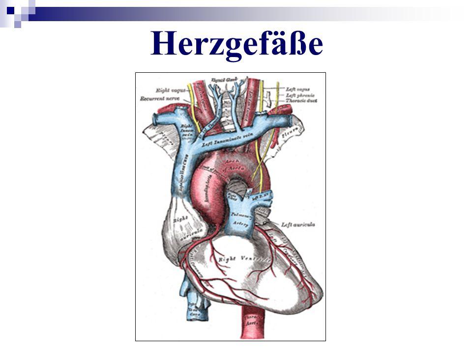 Herzgefäße