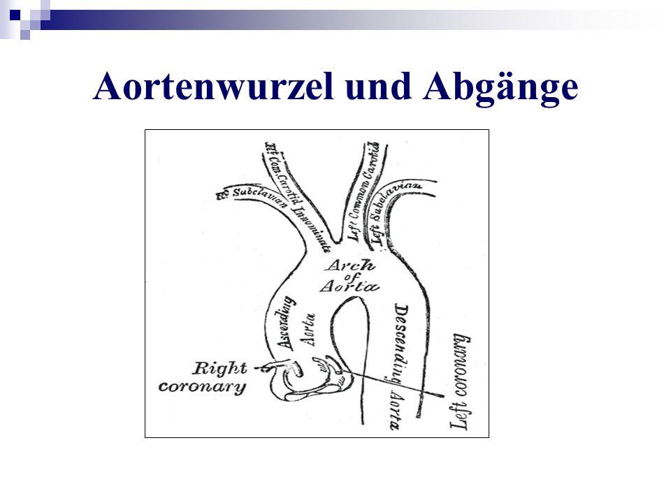 Aortenwurzel und Abgänge