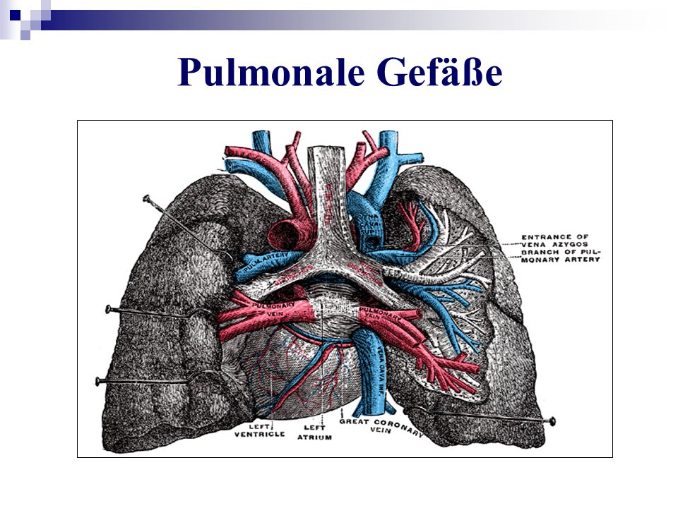 Pulmonale Gefäße