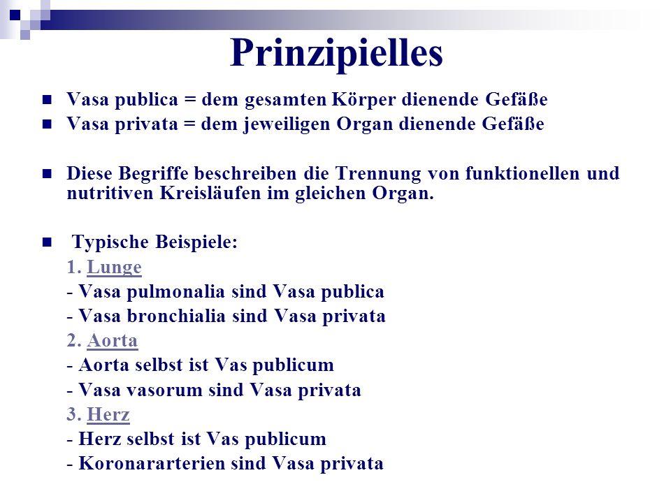 Prinzipielles Vasa publica = dem gesamten Körper dienende Gefäße