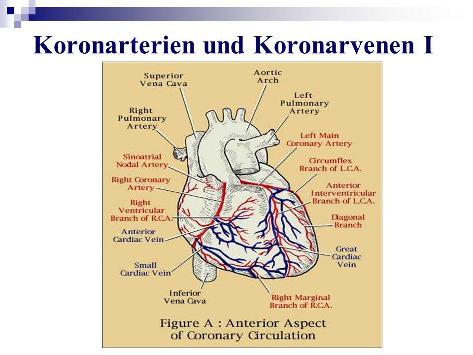 Koronarterien und Koronarvenen I