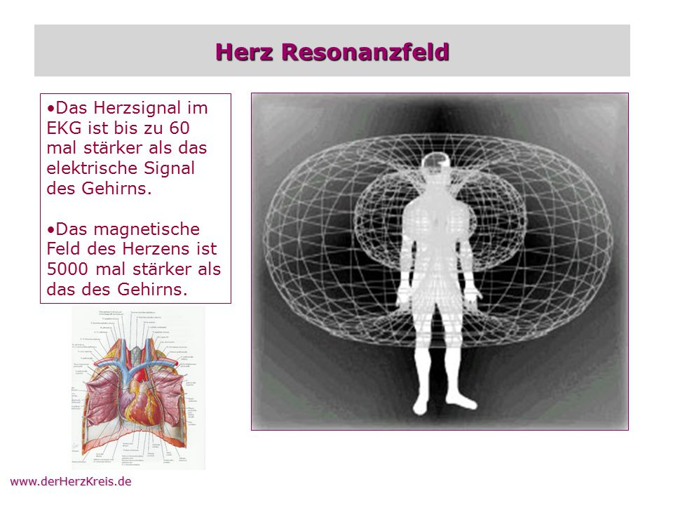 Herz Resonanzfeld Das Herzsignal im EKG ist bis zu 60 mal stärker als das elektrische Signal des Gehirns.
