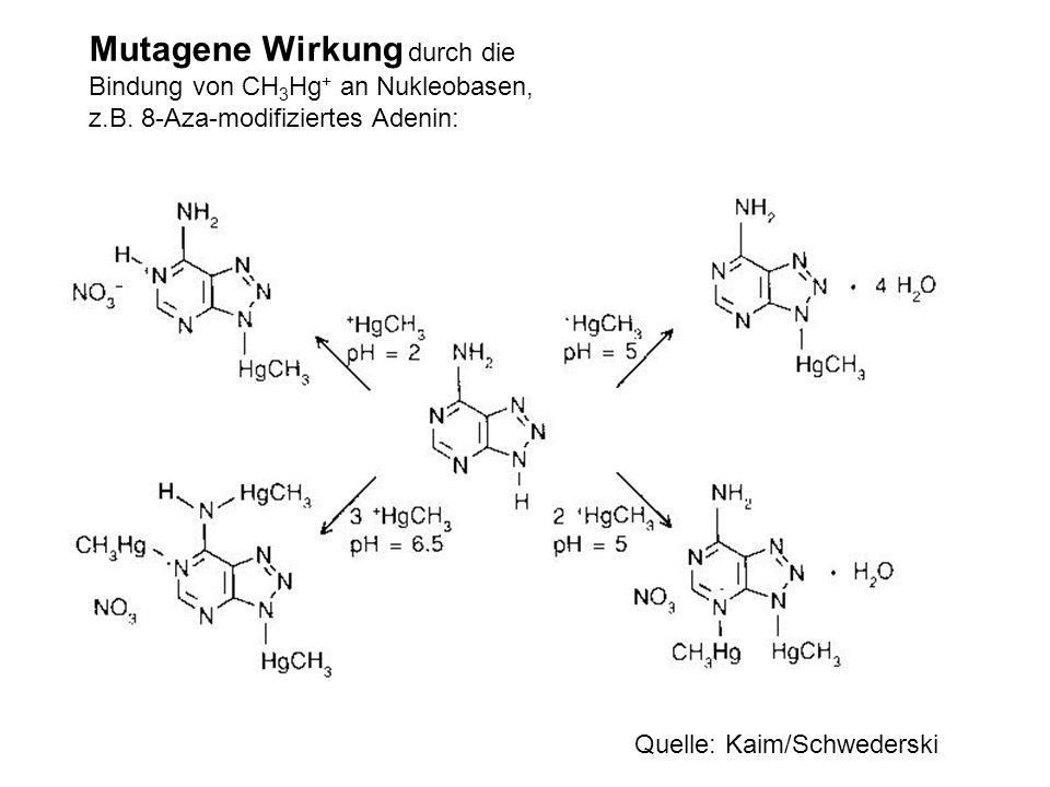 Mutagene Wirkung durch die Bindung von CH3Hg+ an Nukleobasen, z. B
