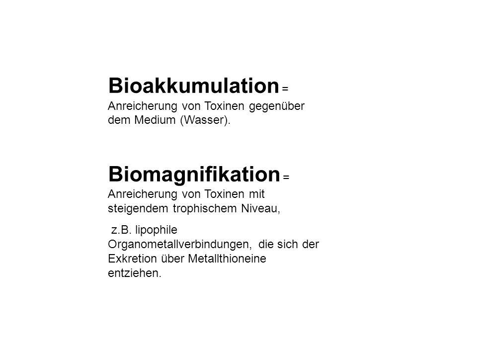 Bioakkumulation = Anreicherung von Toxinen gegenüber dem Medium (Wasser).
