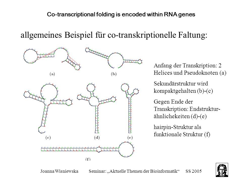 Co-transcriptional folding is encoded within RNA genes