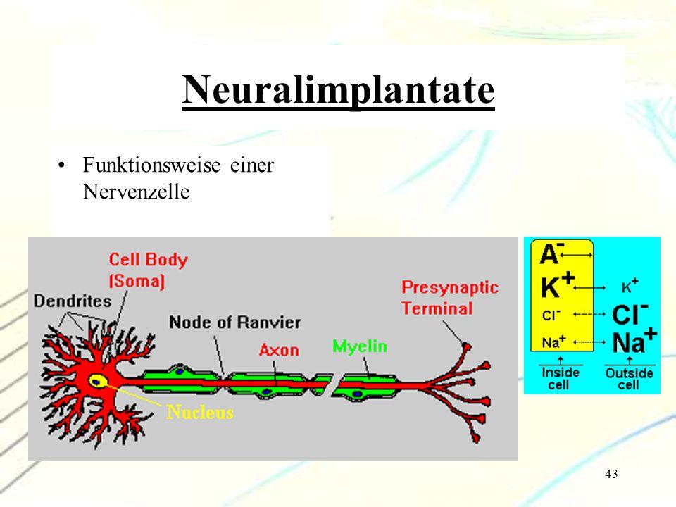 Neuralimplantate Funktionsweise einer Nervenzelle