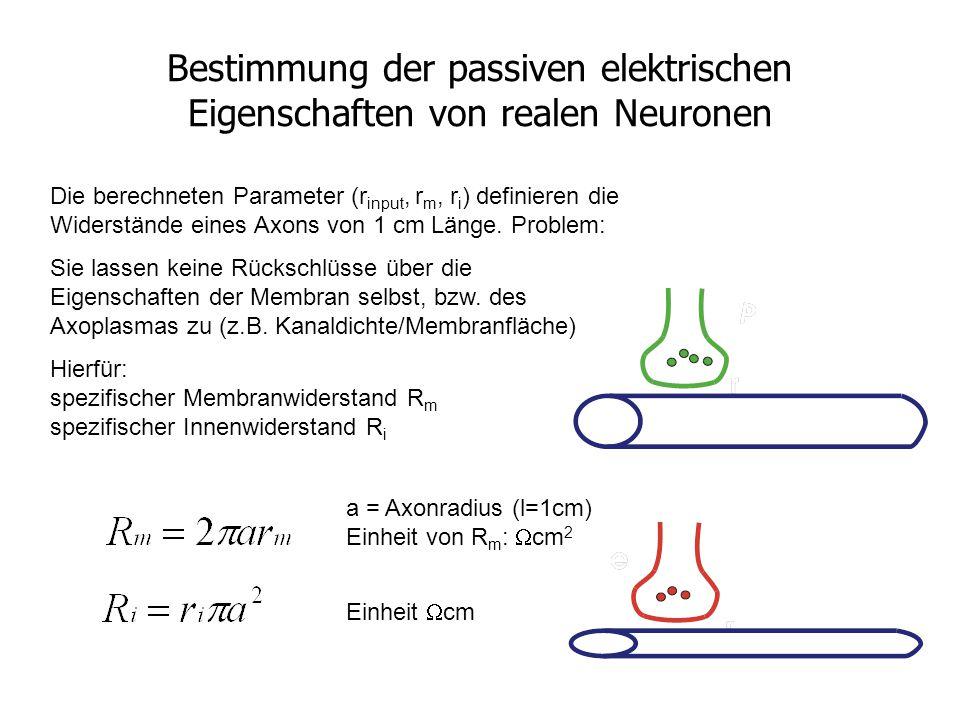 Bestimmung der passiven elektrischen Eigenschaften von realen Neuronen