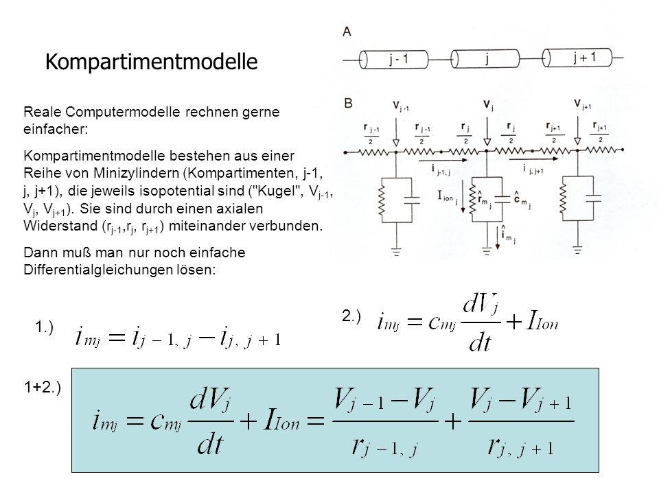 Kompartimentmodelle 2.) 1.) 1+2.)