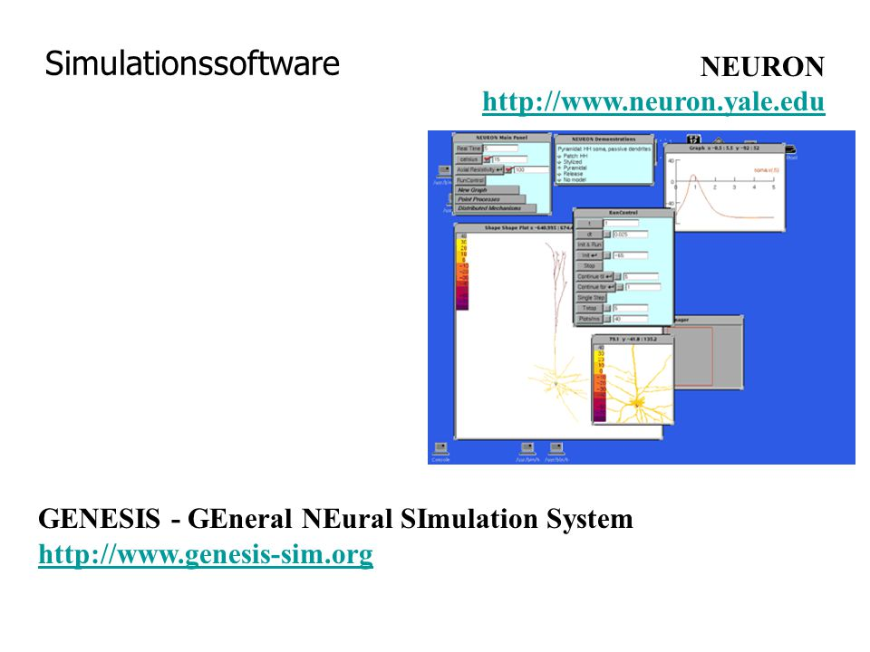 Simulationssoftware NEURON http://www.neuron.yale.edu