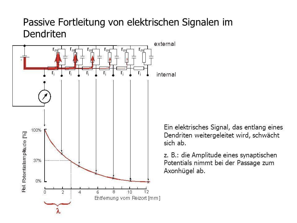 Passive Fortleitung von elektrischen Signalen im Dendriten