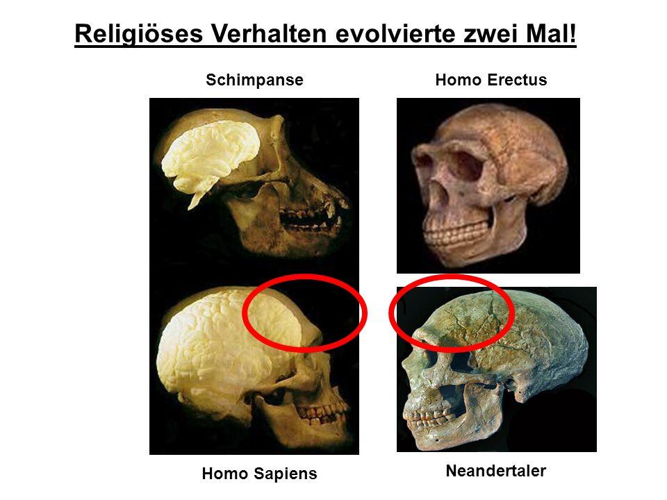 Religiöses Verhalten evolvierte zwei Mal!