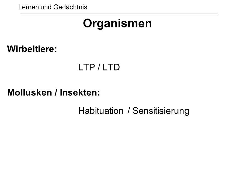 Organismen Wirbeltiere: LTP / LTD Mollusken / Insekten: