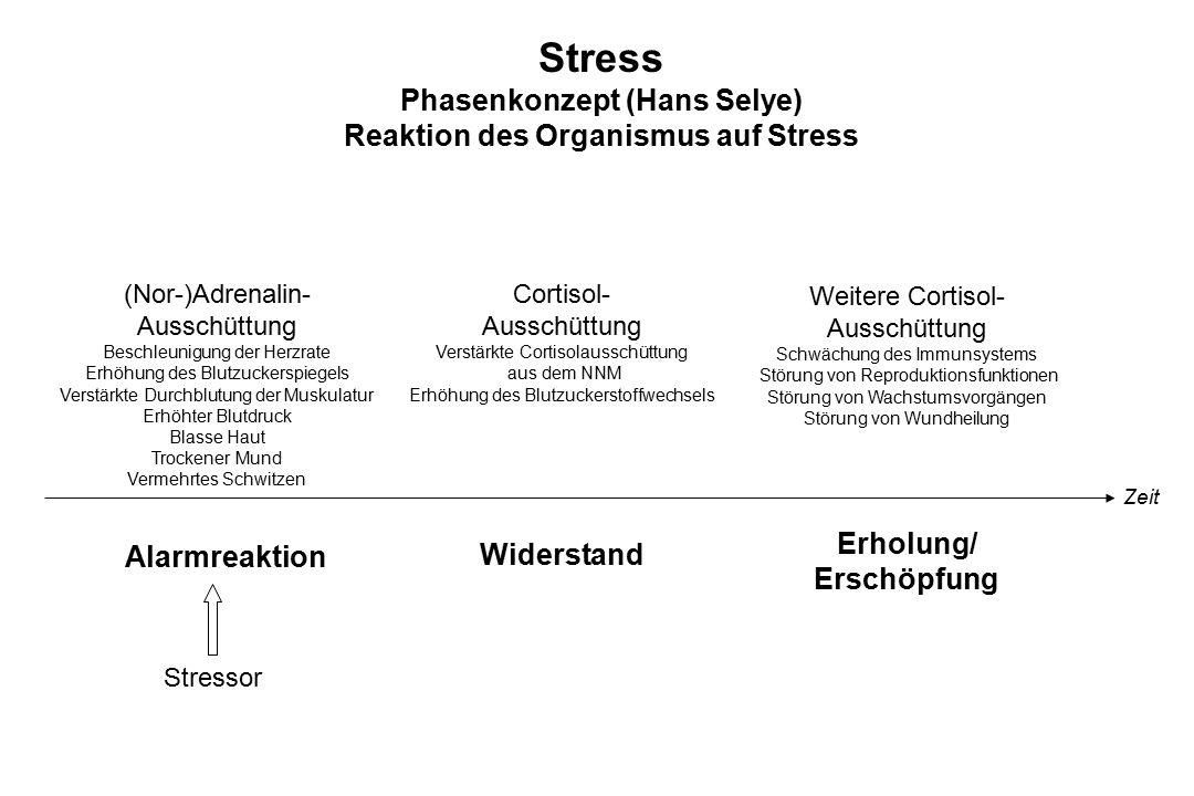 Stress Phasenkonzept (Hans Selye) Reaktion des Organismus auf Stress