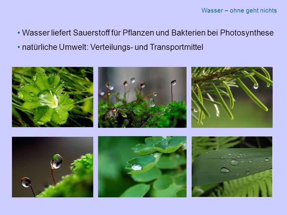 Wasser liefert Sauerstoff für Pflanzen und Bakterien bei Photosynthese
