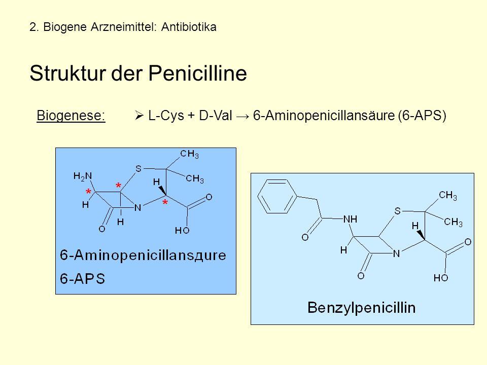 2. Biogene Arzneimittel: Antibiotika Struktur der Penicilline