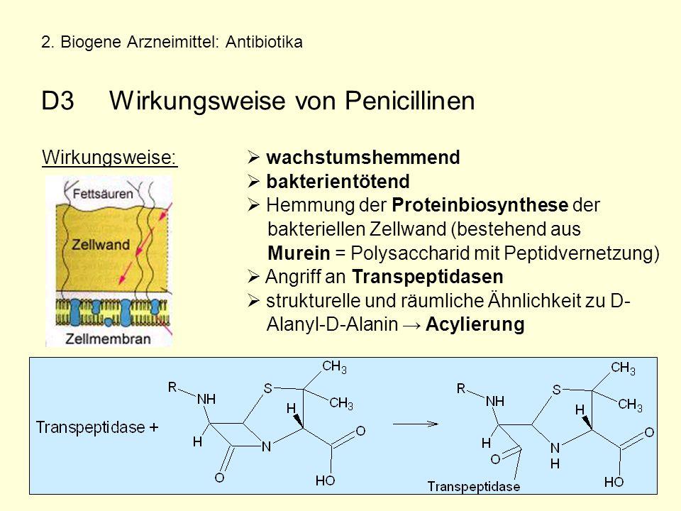 2. Biogene Arzneimittel: Antibiotika D3 Wirkungsweise von Penicillinen