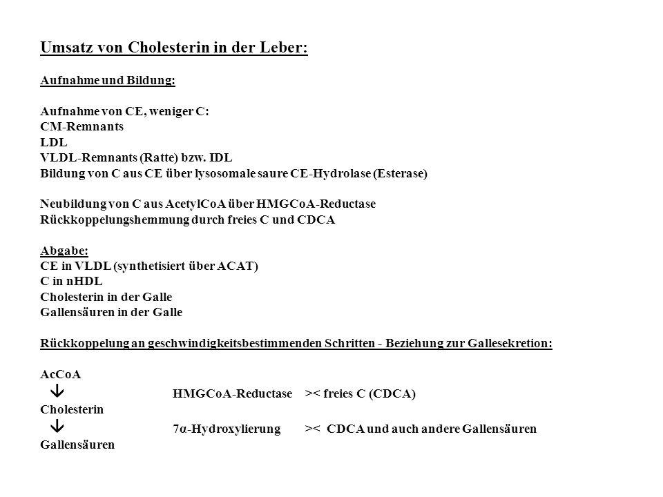Umsatz von Cholesterin in der Leber: