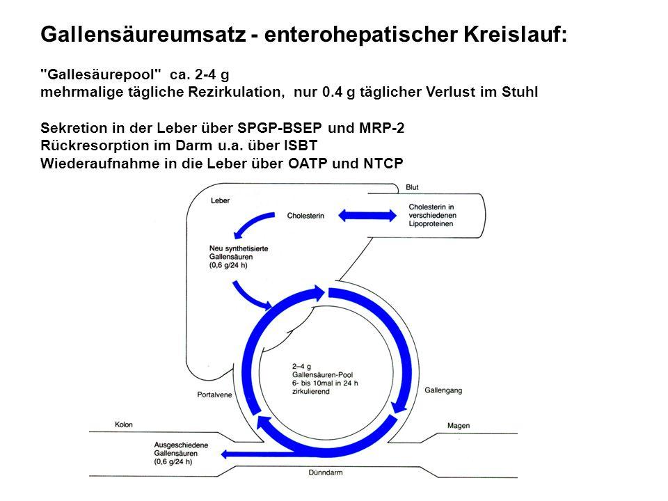 Gallensäureumsatz - enterohepatischer Kreislauf:
