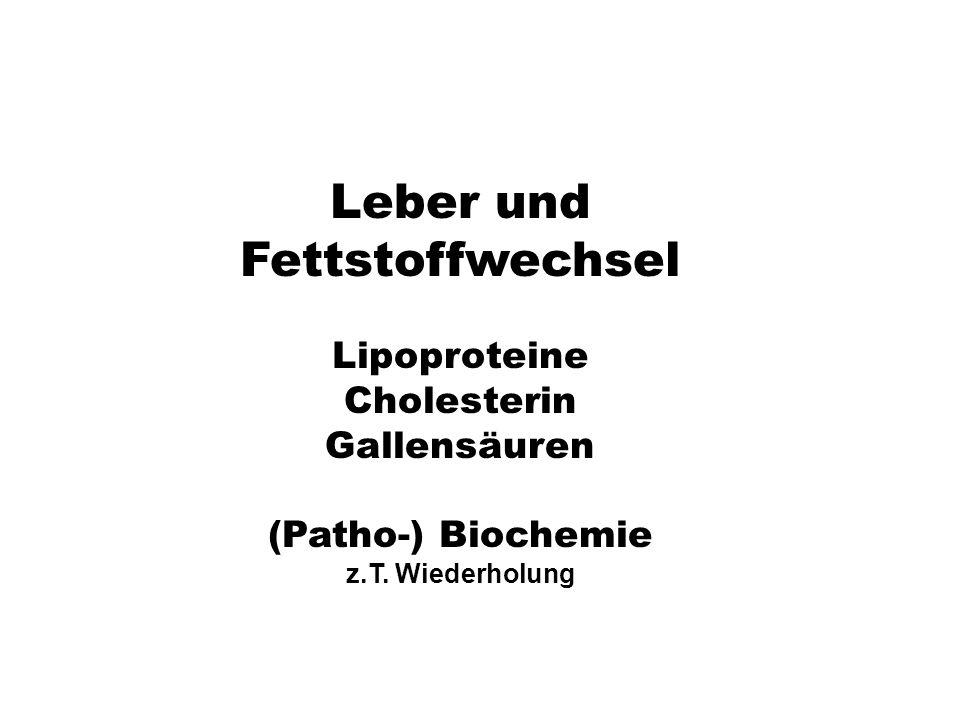Leber und Fettstoffwechsel