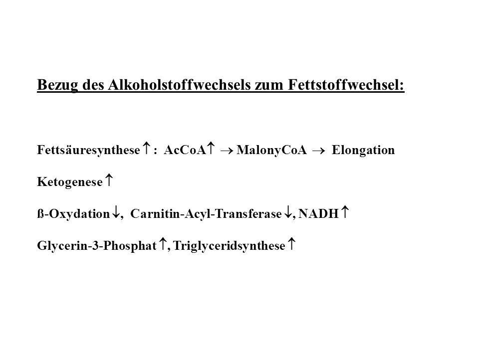 Bezug des Alkoholstoffwechsels zum Fettstoffwechsel: