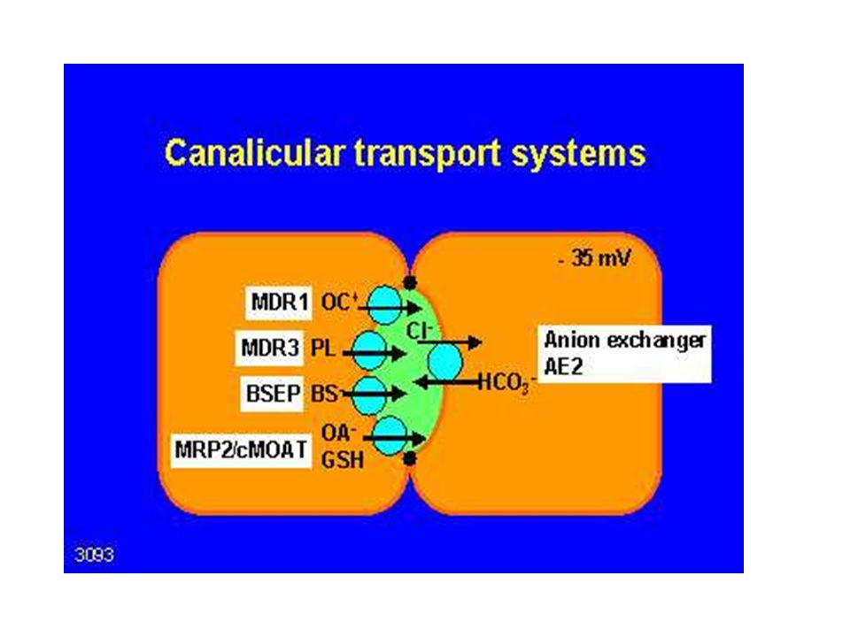Canaliculäre Transporter
