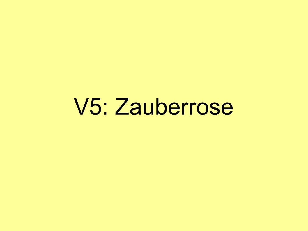 V5: Zauberrose
