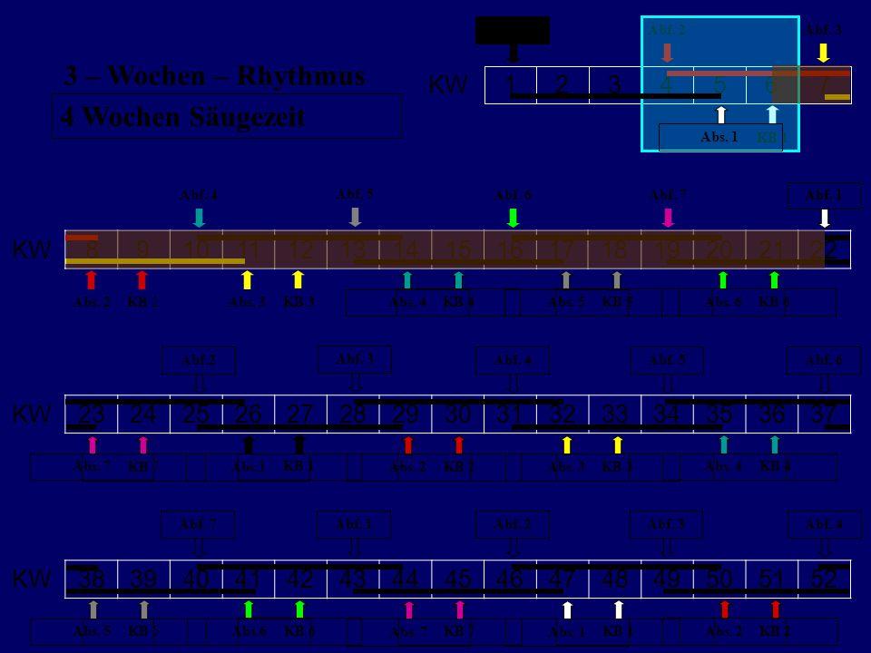 3 – Wochen – Rhythmus 4 Wochen Säugezeit KW 7 6 5 4 3 2 1 KW 8 9 10 11