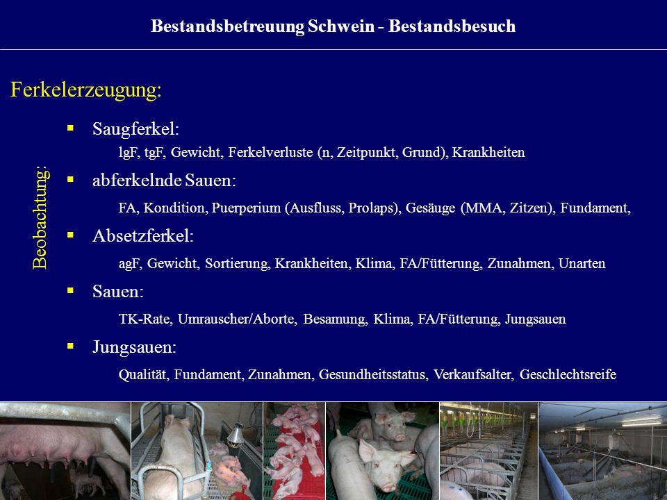 Bestandsbetreuung Schwein - Bestandsbesuch