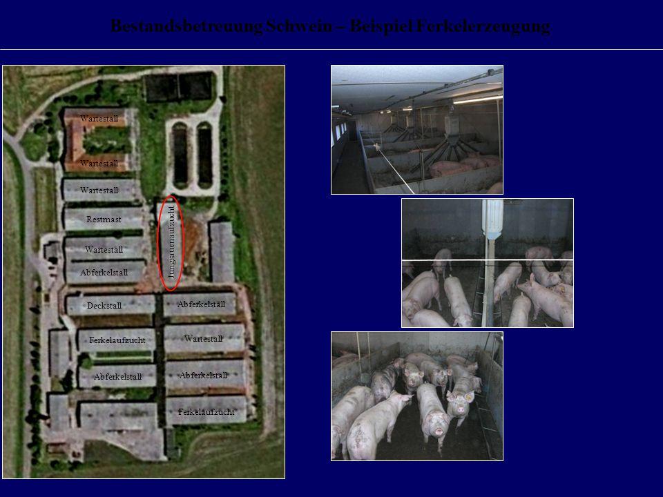 Bestandsbetreuung Schwein – Beispiel Ferkelerzeugung