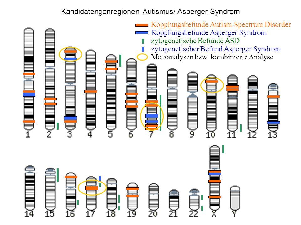 Kandidatengenregionen Autismus/ Asperger Syndrom
