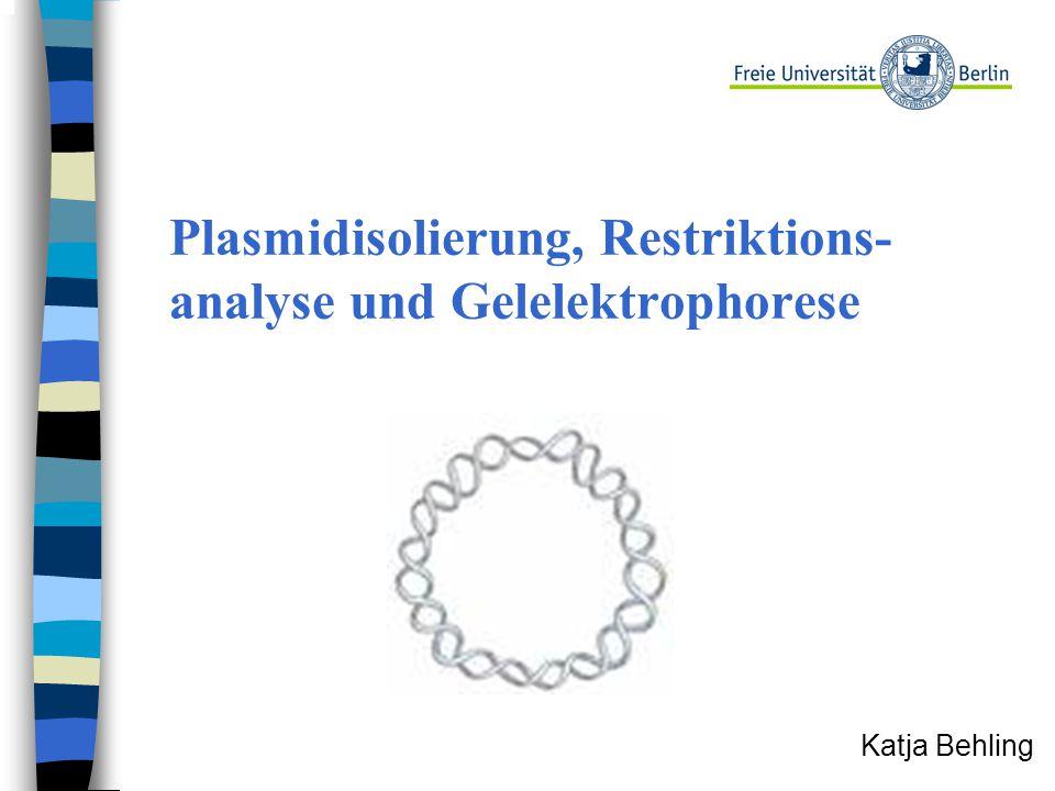Plasmidisolierung, Restriktions-analyse und Gelelektrophorese