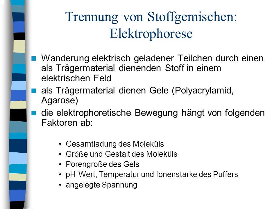 Trennung von Stoffgemischen: Elektrophorese