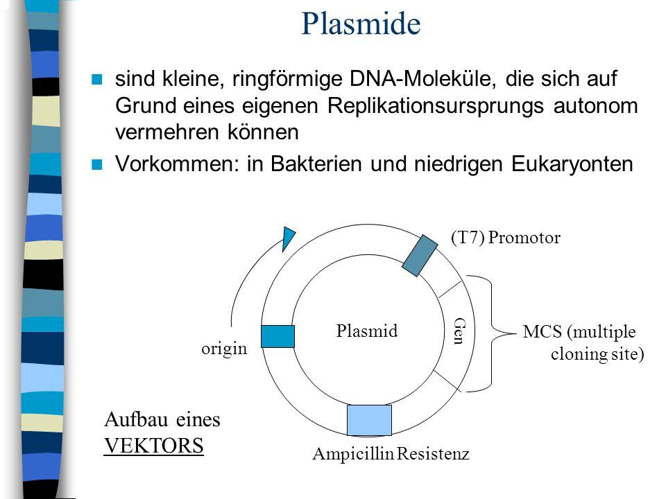 Plasmide sind kleine, ringförmige DNA-Moleküle, die sich auf Grund eines eigenen Replikationsursprungs autonom vermehren können.