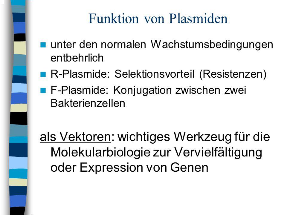 Funktion von Plasmiden