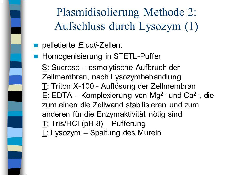 Plasmidisolierung Methode 2: Aufschluss durch Lysozym (1)