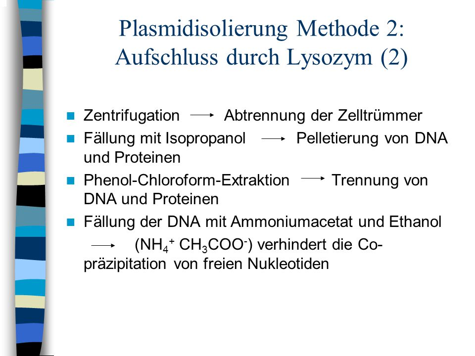 Plasmidisolierung Methode 2: Aufschluss durch Lysozym (2)