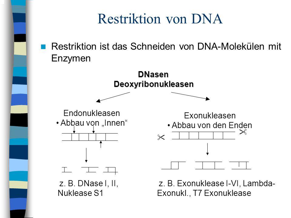 Restriktion von DNA Restriktion ist das Schneiden von DNA-Molekülen mit Enzymen. DNasen. Deoxyribonukleasen.