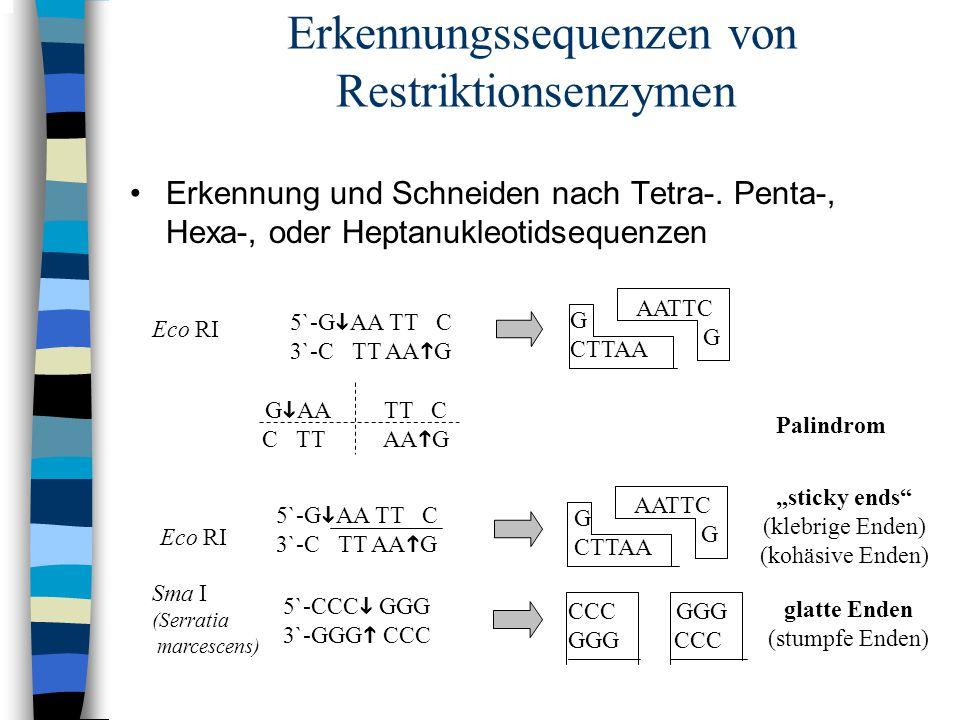 Erkennungssequenzen von Restriktionsenzymen