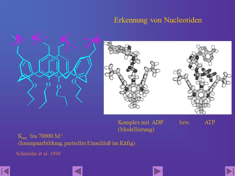 Erkennung von Nucleotiden