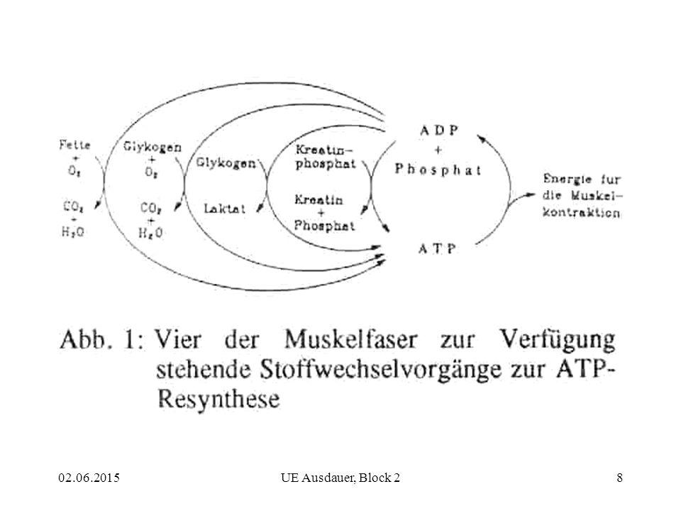 """Da die ATP-Reserven der Muskelfasern gering sind, muss das anfallende ADP laufend wieder zu ATP resynthetisiert werden, um über genügend """"Benzin zu verfügen. Es gibt dafür vier verschiedene Stoffwechselvorgänge (Abb. 1):"""