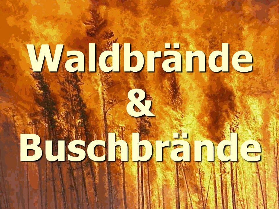 Waldbrände& Buschbrände
