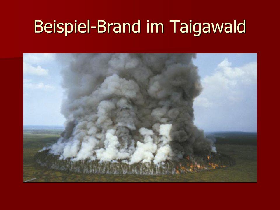 Beispiel-Brand im Taigawald