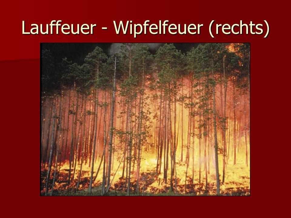 Lauffeuer - Wipfelfeuer (rechts)