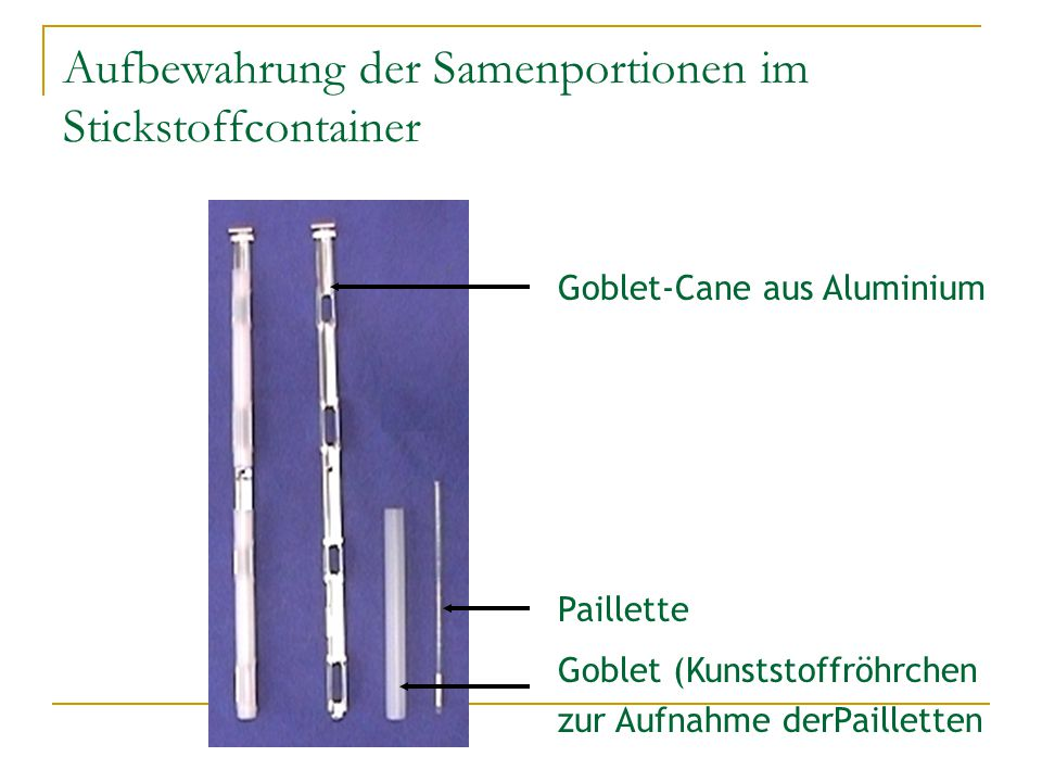 Aufbewahrung der Samenportionen im Stickstoffcontainer
