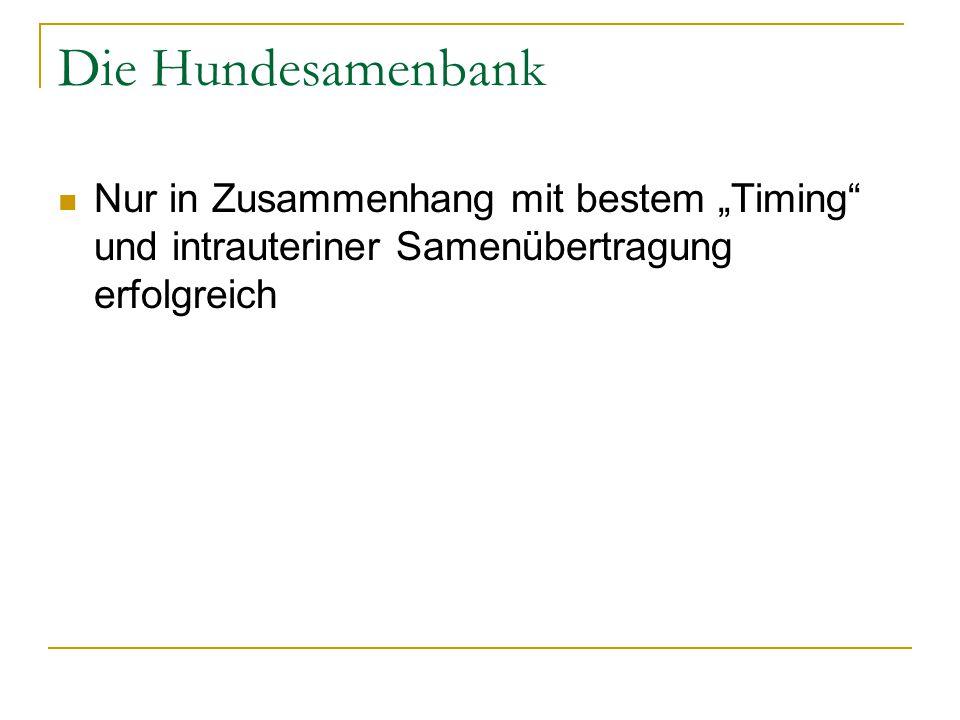 """Die Hundesamenbank Nur in Zusammenhang mit bestem """"Timing und intrauteriner Samenübertragung erfolgreich."""