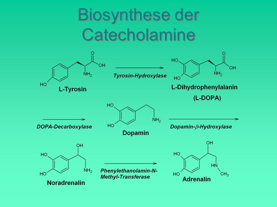 Biosynthese der Catecholamine