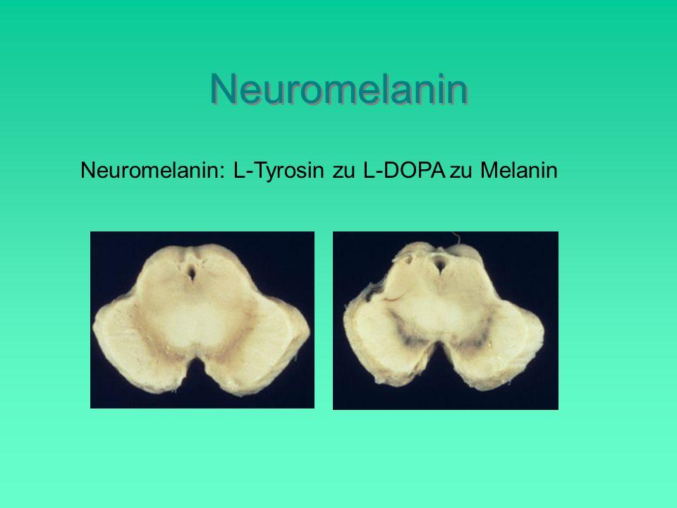 Neuromelanin Neuromelanin: L-Tyrosin zu L-DOPA zu Melanin