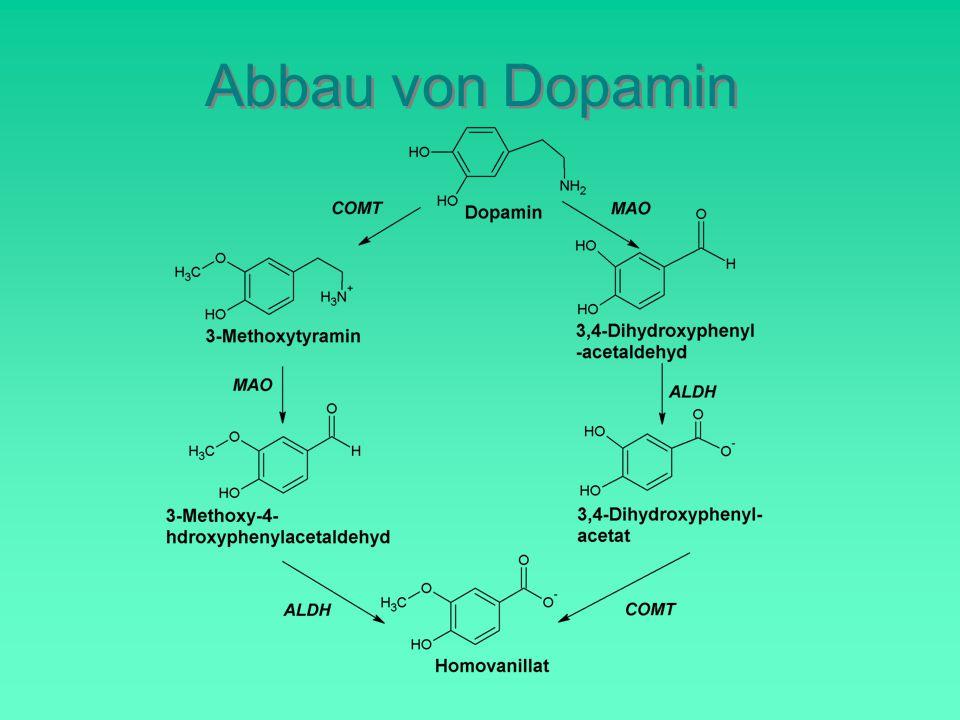 Abbau von Dopamin