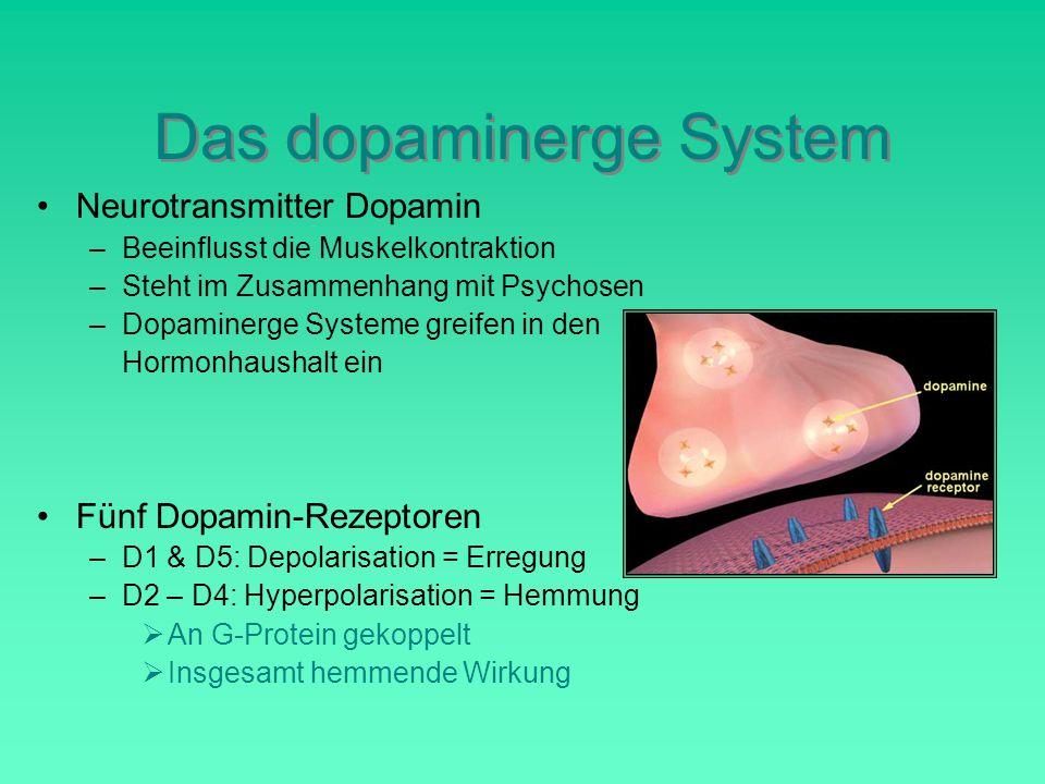 Das dopaminerge System