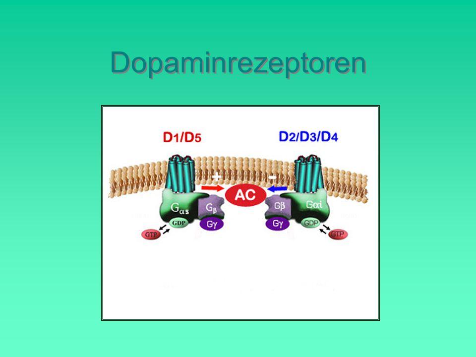 Dopaminrezeptoren D1/D5-Gruppe (kurz D1-Gruppe):
